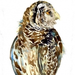 Barred Owl Hazel Jarvis watercolor