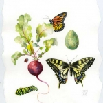 Sampler with Swallowtail Hazel Jarvis watercolor