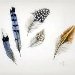 Feather Collection Hazel Jarvis watercolor 2002