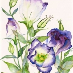 Lisianthus Hazel Jarvis watercolor