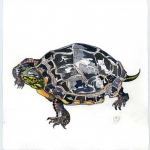 Painted Turtle Hazel Jarvis watercolor 2008