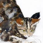 Kitten Study Hazel Jarvis watercolor