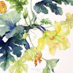 Zucchini Squash Flowers