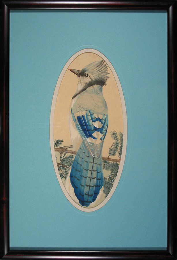 Blue Jay, gouache, c.1880