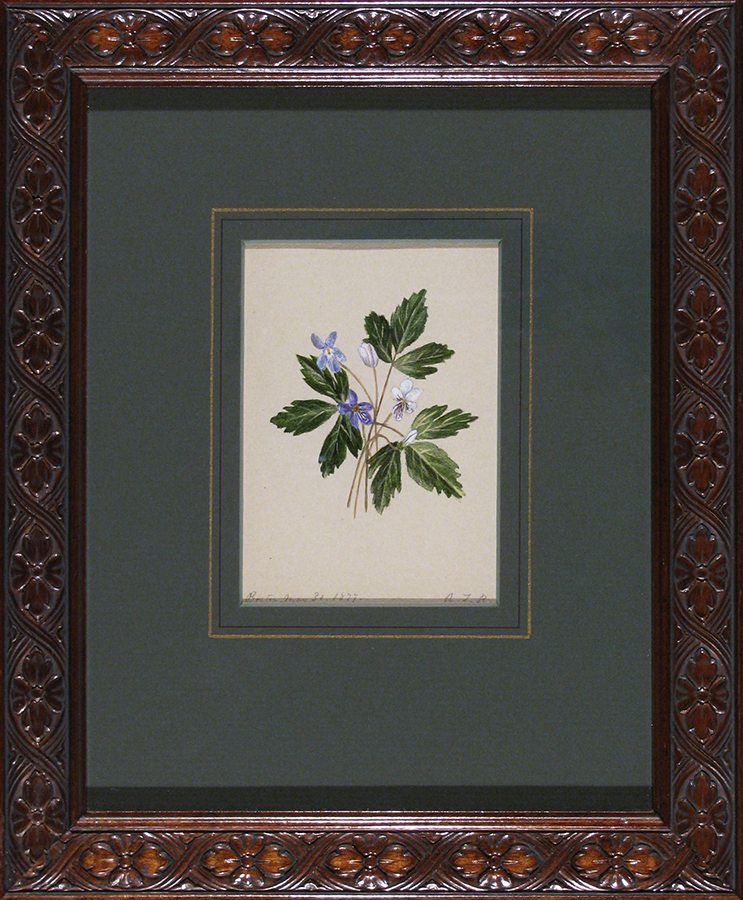 Lavender and White Flowers; Boston; gouache; 1877