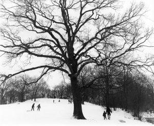 Winter in Prospect Park, George Forss, silver gelatin print; 1983