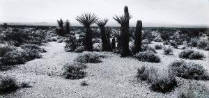 Cactus, Arizona, 1987