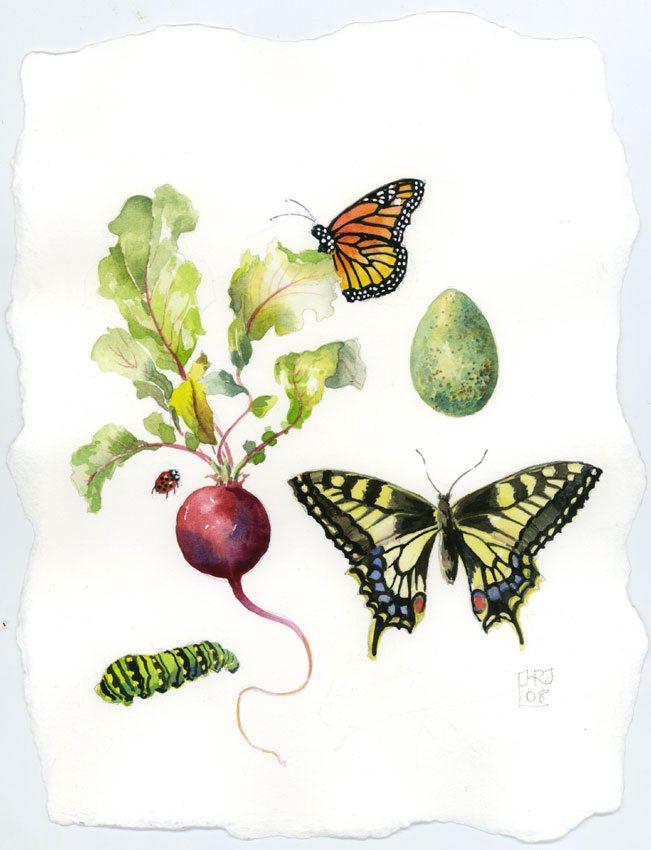 Sampler/Yellow Swallowtail