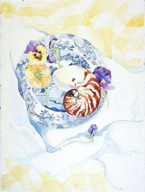 Spode with Nautilus